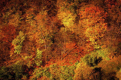 Photograph - Autumn Abstract. Beech Trees Forest by Jenny Rainbow