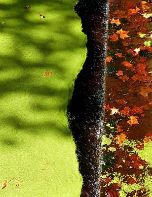 Photograph - Autumn Abstract by Bill Jordan