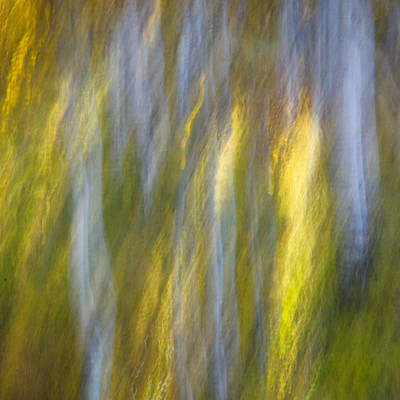 Design Turnpike Books Rights Managed Images - Autumn Abstract Royalty-Free Image by James Woody