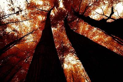 Photograph - Autumn Canopy Abstract by Karl Anderson