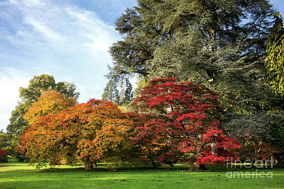 Photograph - Autumn Acers Westonbirt Arboretum by Tim Gainey
