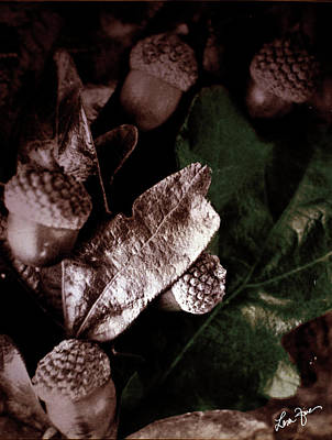 Photograph - Autumn Acorns by Lesa Fine