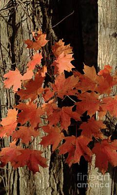 Photograph - Autumn Adieu by Ann Horn