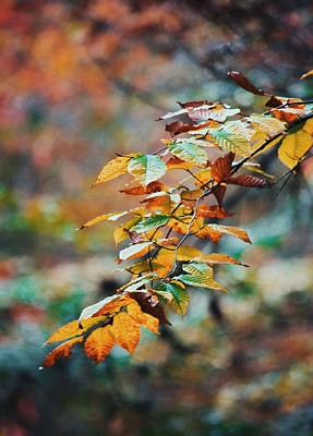Photograph - Autumn Aesthetics by Parker Cunningham