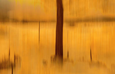 Photograph - Autumn Afternoon by Deborah Hughes