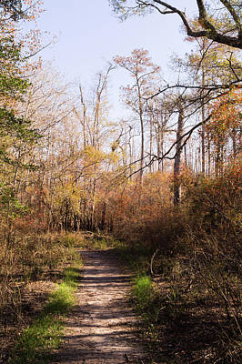 Photograph - Autumn Afternoon On A Woodland Trail by MM Anderson