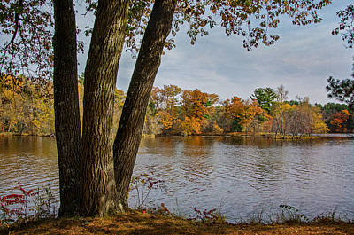 Photograph - Autumn Afternoon by Susan McMenamin