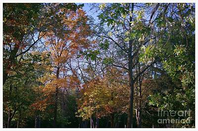 Frank J Casella Royalty-Free and Rights-Managed Images - Autumn Air by Frank J Casella
