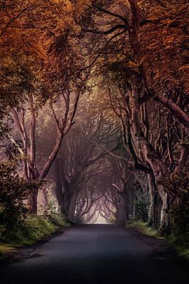 Photograph - Autumn Alley In Northern Ireland by Jaroslaw Blaminsky
