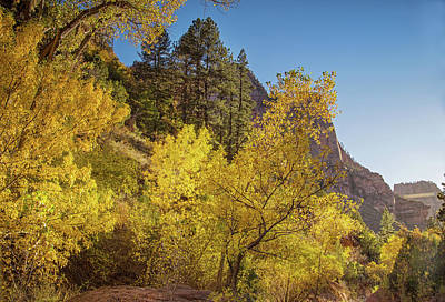 Photograph - Autumn Along Kolob Creek by Kunal Mehra
