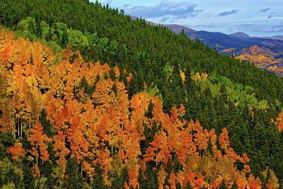 Photograph - Autumn Along Squaw Pass by John De Bord