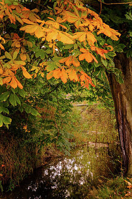 Art Print featuring the photograph Autumn Along The Bog Burn by RKAB Works