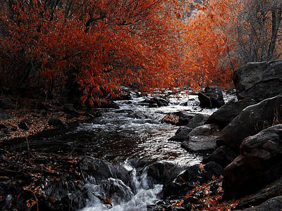 Photograph - Autumn Along The Creek by Ernie Echols