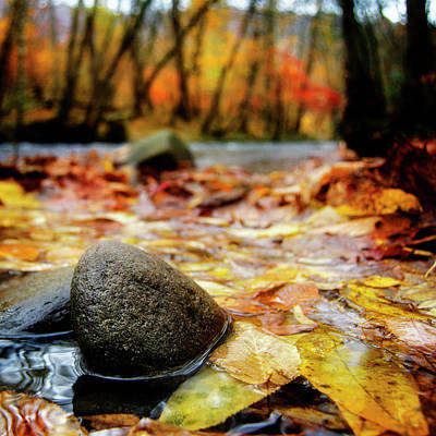 Yellow Photograph - Autumn Along The Oconaluftee River by Greg Mimbs