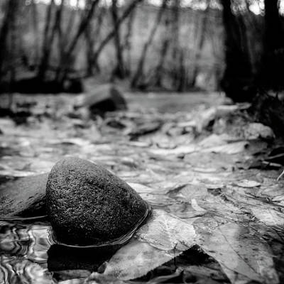 Autumn Photograph - Autumn Along The Oconaluftee River In Black And White by Greg Mimbs