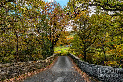 Photograph - Autumn Ambiance by Adrian Evans