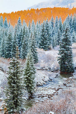 Photograph - Autumn And Winter Clash by Teri Virbickis