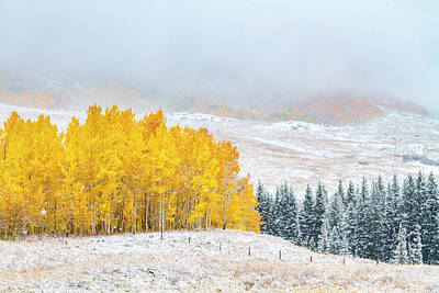 Photograph - Autumn And Winter Collide by Teri Virbickis