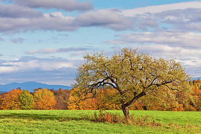 Photograph - Autumn Apple Tree by Alan L Graham