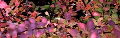Photograph - Autumn Arrangement by Jerry Sodorff