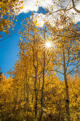 Photograph - Aspen Autumn by Dallas Golden