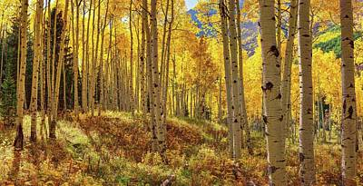 Digital Art - Autumn Aspen Forest Aspen Colorado Panorama by OLena Art Brand