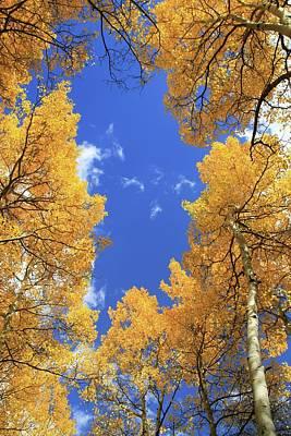 Photograph - Autumn Aspen Trees Blue Sky by Dan Sproul