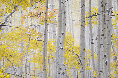 Meaningful Art Photograph - Autumn Aspens 2 by Leland D Howard