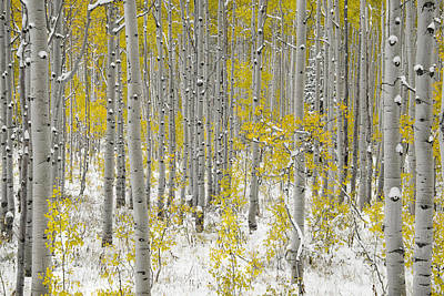 Photograph - Autumn Aspens 5 by Leland D Howard