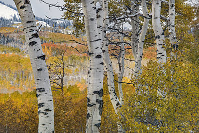 Fall Photograph - Autumn Aspens 8 by Leland D Howard