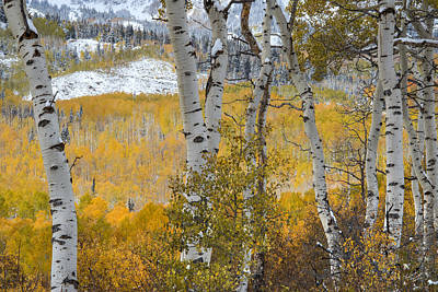 Photograph - Autumn Aspens 9 by Leland D Howard