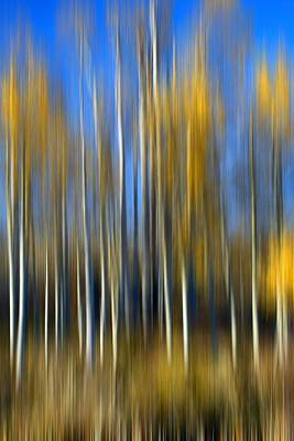 Photograph - Autumn Aspens - Abstract by Nikolyn McDonald