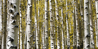 Bath Time Rights Managed Images - Autumn Aspens Royalty-Free Image by Adam Romanowicz