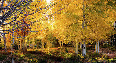 Photograph - Autumn Aspens by TL  Mair