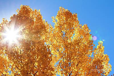 Photograph - Autumn Aspens With Sun Star by Ben Graham