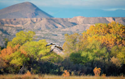 Wildlife Photograph - Autumn At Bosque Del Apache by Loree Johnson