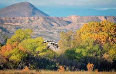 Photograph - Autumn At Bosque Del Apache by Loree Johnson