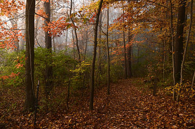 Photograph - Autumn At Cascade Valley by Ann Bridges