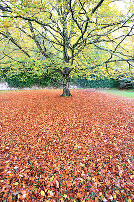 Photograph - Autumn At Coole Park Galway Ireland by Pierre Leclerc Photography