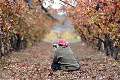 Original featuring the photograph Autumn At Lachish Vineyards 1 by Dubi Roman