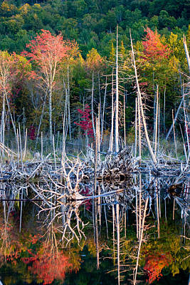 Autumn At Moosehead Bog Art Print