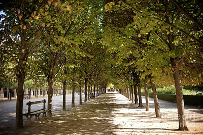 Photograph - Autumn At Palais Royal Garden by Ivy Ho