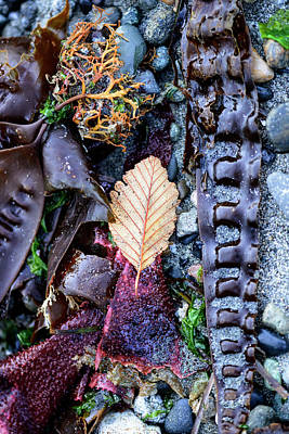Photograph - Autumn At The Beach by Bob VonDrachek