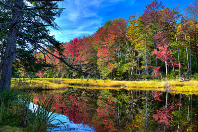 Photograph - Autumn At The Pond by David Patterson