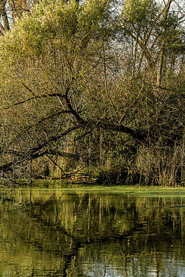 Photograph - Autumn At The Wetlands by Edward Peterson