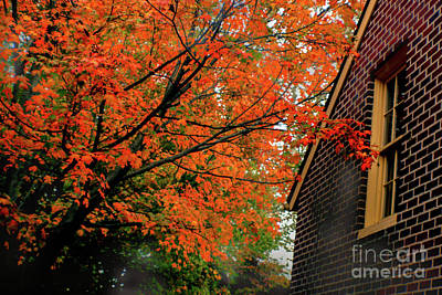 Photograph - Autumn At The Window by Sandy Moulder