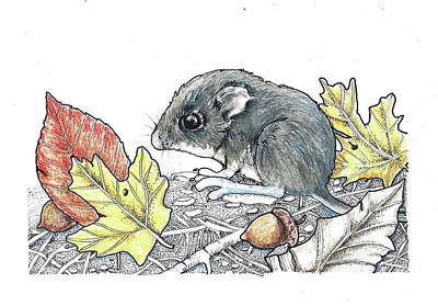 Forest Floor Drawing - Autumn Baby by Julie Townsend