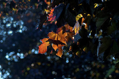 Digital Art - Autumn Backlit by JGracey Stinson