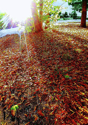 Photograph - Autumn Backlit Street by Roger Bester