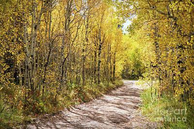Photograph - Autumn Backroads by Lynn Sprowl